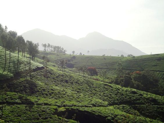 Munnar the city of rolling mountains and the Tahr