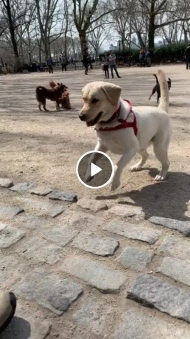 cachorro se divertindo com o dono…