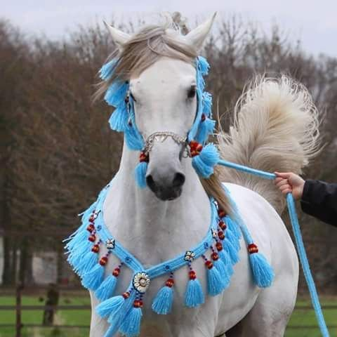 صوره حصان ابيض جميل Most Beautiful Horses Beautiful Horse Pictures White Horses