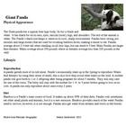 Animal research articles for animals of Asia! Plus a thinking map to organize your information! Awesome!