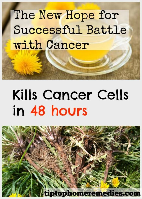 Learn about dandelion tea. The new hope for successful battle with cancer.
