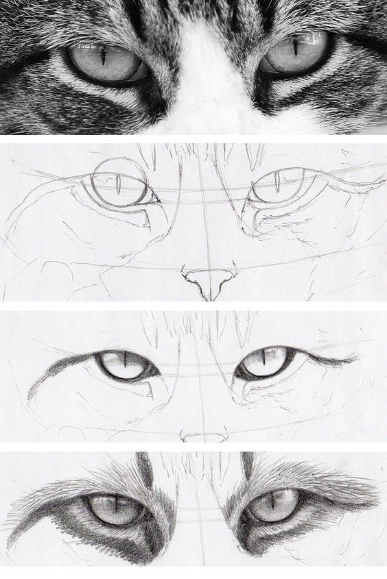 Cats have some of the most intriguing eyes around — which is why they're a fun drawing challenge. Learn how to draw cat eyes right meow on Craftsy!