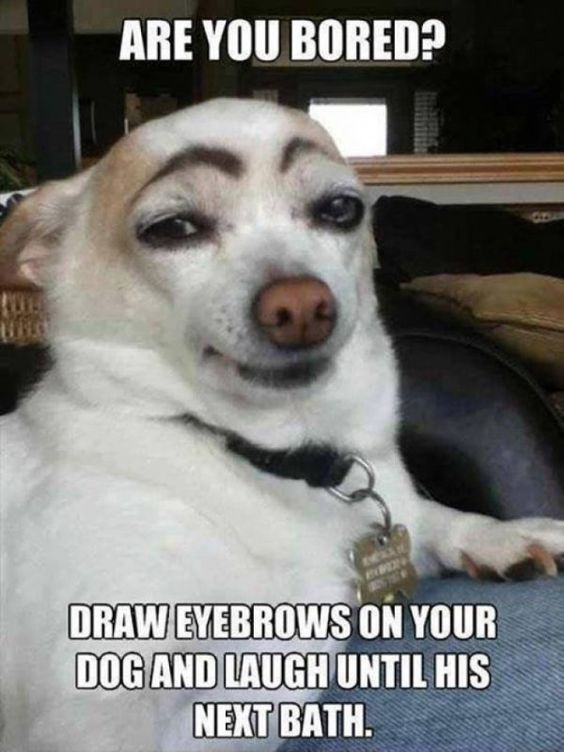 60 Dog Memes So Funny That Will Keep You Laughing For Hours Funny Picture Funny Animals How To Draw Eyebrows Funny Pictures