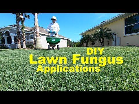 How To Prevent Fungus In The Lawn Using Home Depot Products Lawn Fungus Control Youtube Yard Maintenance Diy Lawn Lawn Care