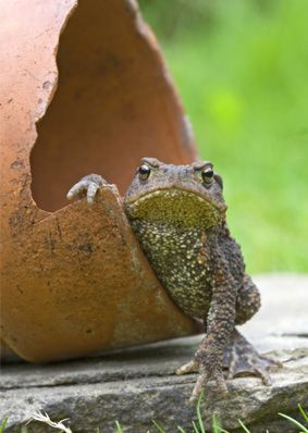 Making a Toad House DIY. Pinner wrote: I made a nice little 2-story place out of a broken pot and an old brick, for the toad that lives in my garden. He's gotten kind of territorial about the whole thing...: