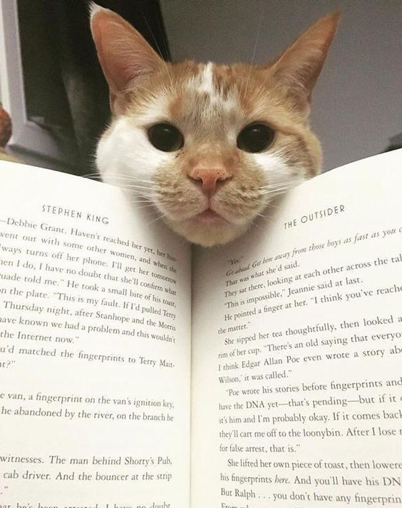 Whenever I Am Trying To Read Or Something Like That My Cats Always