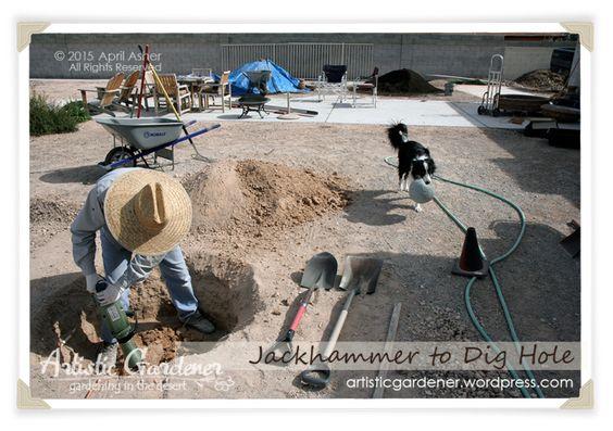 Dig A Fruit Tree Hole