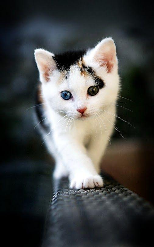 Beautiful Kitty Kitten Kitties Cute Mignon Adorable