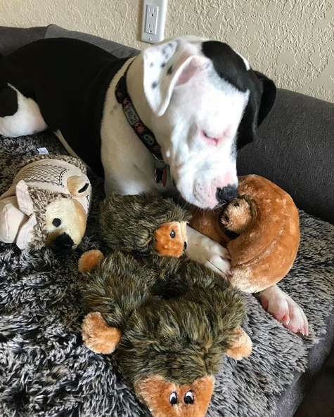 Dog Is Still Obsessed With The First Toy She Ever Got Dogs Dog List Your Pet