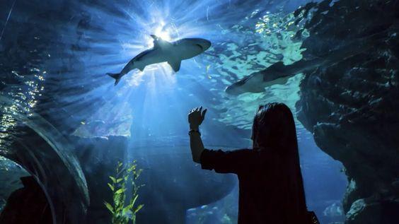 อุโมงค์ปลาใต้น้ำ มีที่ไหนบ้าง