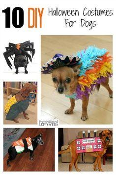 easy dog halloween costume ideas
