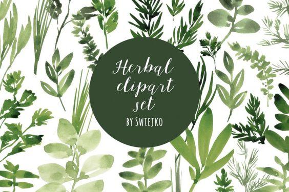 Watercolor Herbs set By swiejko