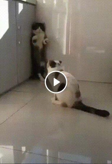 O gato não deixa o outro sair daquele lugar