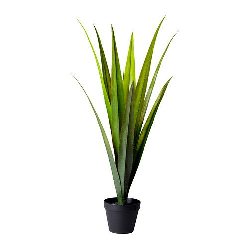 Potted plants ikea and plants on pinterest for Ikea plantes