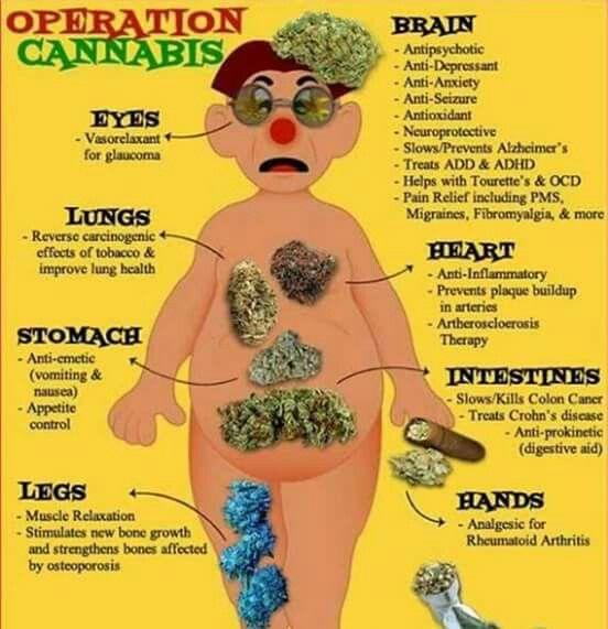 how to stop marijuana effects