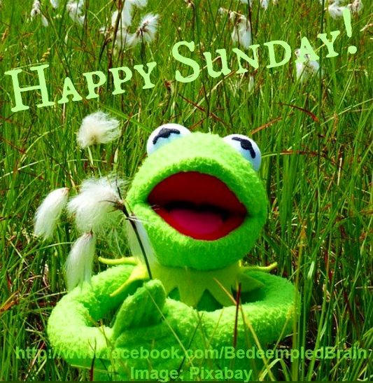 Happy Sunday!: