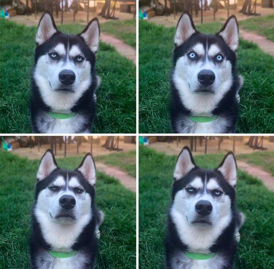 """""""capturei o momento exato de quando eu fingi jogar a bola para o meu cachorro e ele percebeu q foi traído"""""""