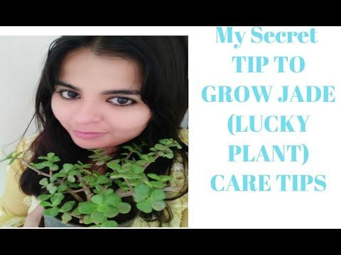 Pin On Plant Care Videos