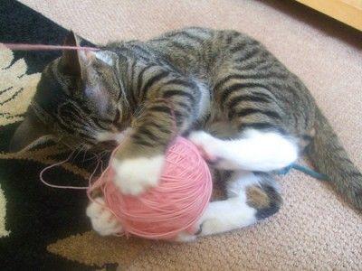 Sweet kitten playing with yarn    xx