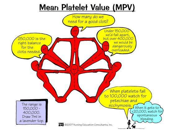 Mean Platelet Value (MPV) Mean platelet volume (MPV) is a machine-calculated measurement of the average size of platelets found in blood and is typically included in blood tests as part of the CBC. Since the average platelet size is larger when the body is producing increased numbers of platelets the MPV test results can be used to make inferences about platelet production in bone marrow or platelet destruction problems.