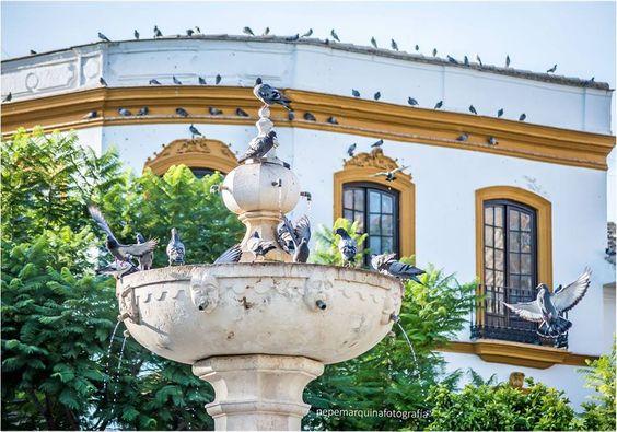 #Osuna, Plaza Mayor