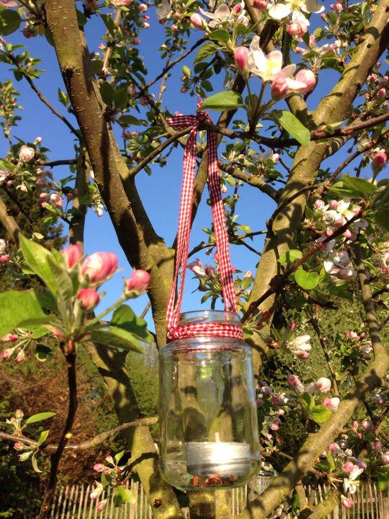 Frühling mit Apfelblüte!