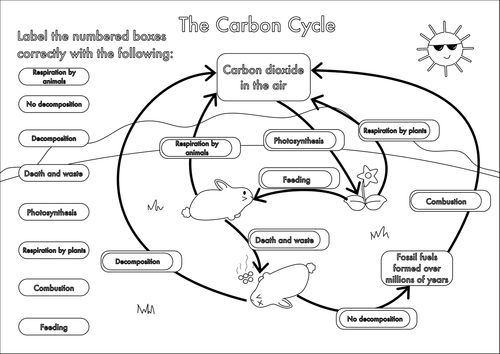 Image 500 354 In 2020 Carbon Cycle Cycle Teaching Resources