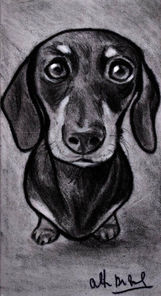 Dachshund Dog Drawing Sketch Portrait Pencil Disegno Ritratti