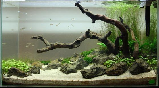 Aquascaping with driftwood rocks live plants www for Fish tank driftwood