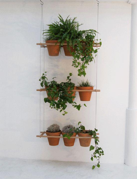 Macetero interi r pinterest plantas y jard n for Plantas jardin baratas