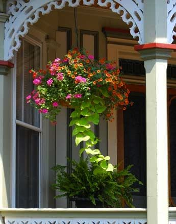 Hanging Baskets Add Wow To Your Porch Porches Hanging Baskets And Baskets