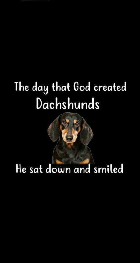 Dachshund Puppiesdachshund Dachshund Dachshund Quotes Funny