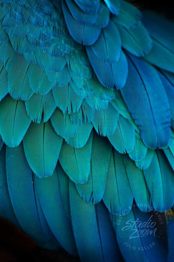 Blue and Green Bird Feathers Photography Print, Exotic ...