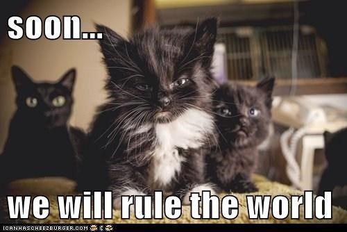 Seventeen Cats Who Are Plotting to Rule The World One Day (Memes) - I Can Has Cheezburger? | Cats, Funny animal pictures, Newborn kittens
