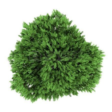 Render vista en planta arbol arbusto plantas render for Incompatibilidad en plantas