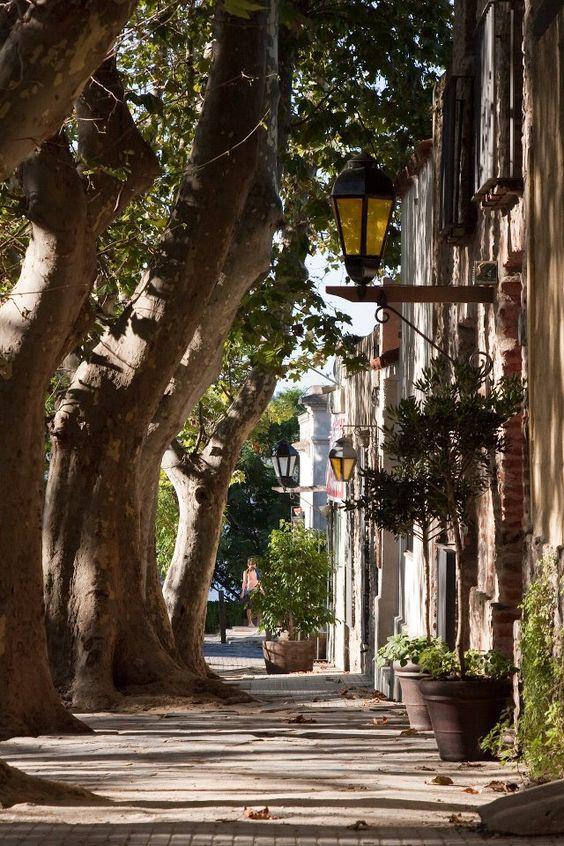 Uruguay ... wonderful old trees!
