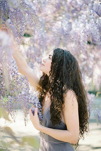 for the love of wisteria | Flickr - Photo Sharing!