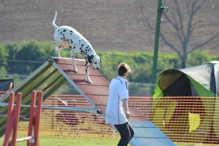 La compétition d'agility organisée dimanche prochain par le Sport canin sedanais…