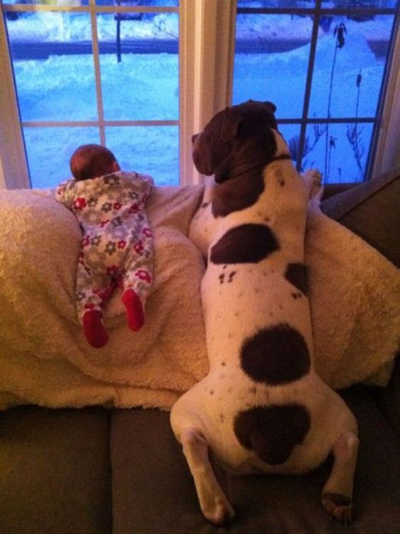 Small Children and Big Dogs – 22 Pics -             (adsbygoogle = window.adsbygoogle || []).push({});                        (adsbygoogle = window.adsbygoogle || []).push({});: