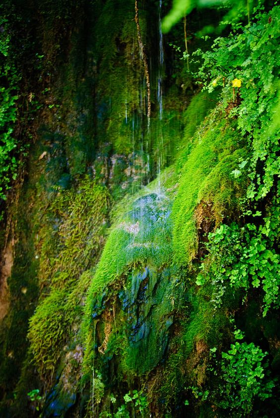 ✮ The most beautiful rain forest located in Arizona, the Tonto Natural Bridge area