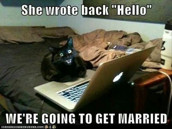 Black cat hello married meme