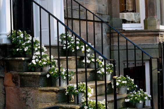 pot plants on steps