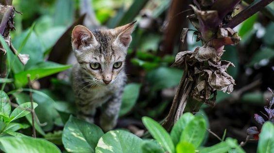 Os gatos são exploradores por natureza e, por isso, amam tanto gramados e jardins: quando bem cuidados, esses espaços oferecem um ambiente rico em cores, texturas, cheiros e sabores. Quer saber como criar uma área verde estimulante