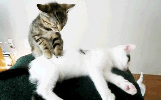 cat massage therapist