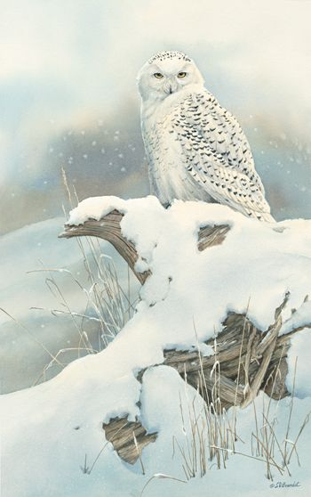 A085535530: Northern Nomad - Snowy Owl Painting by Susan Bourdet                                                                                                                                                                                 More