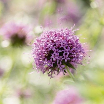Uta Naumann: Lila Blüte im Gegenlicht - Glasbild  #artgalerie-bildershop.de