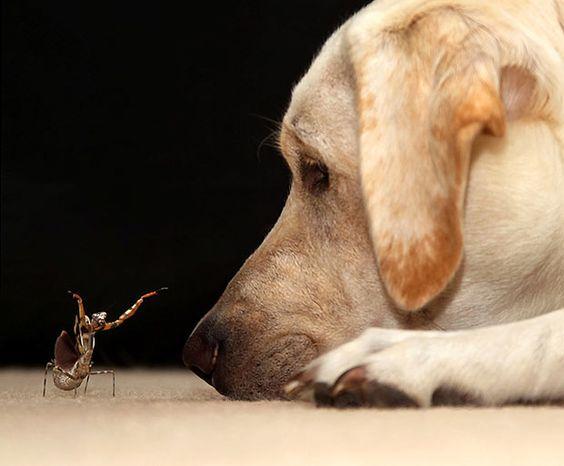 dog and praying mantis.
