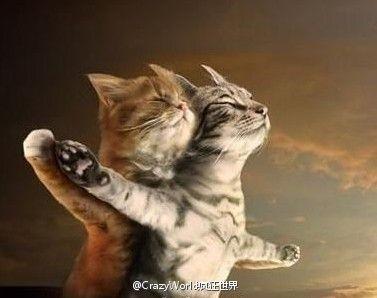 Cat Titanic!