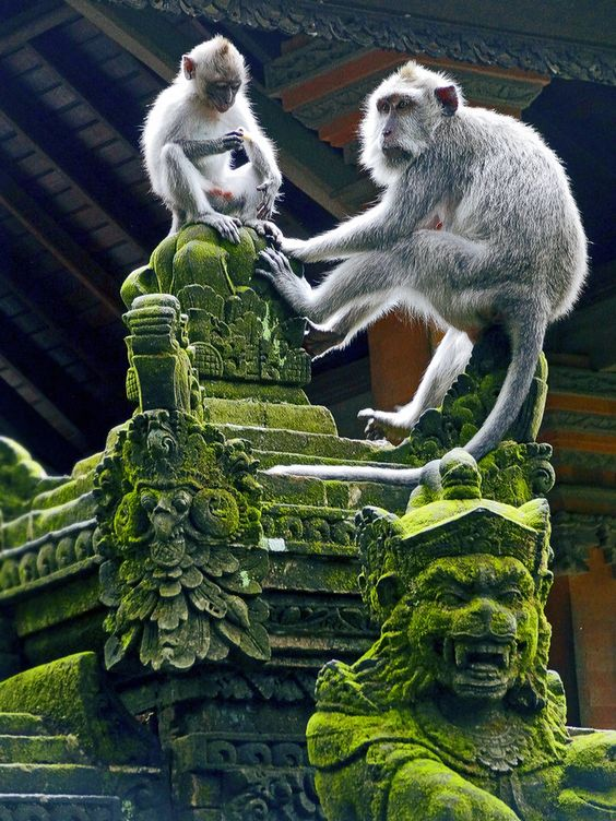Like to go and see the Monkey forest in Ubud, Bali?  Contact me for a tour - www.rudisbalitours.com: