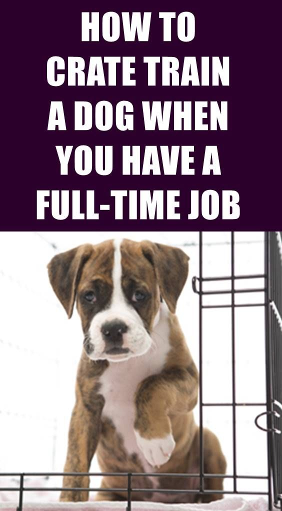 Pin By Michelle Wise On Precious In 2020 Crate Training